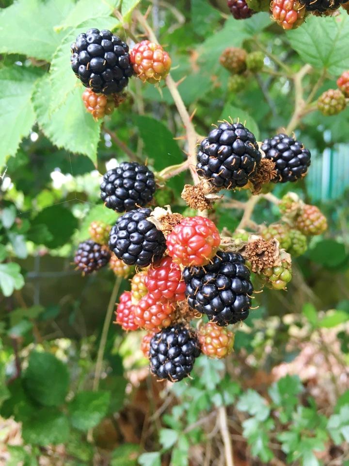 easy-vegan-blackberry-apple-pie