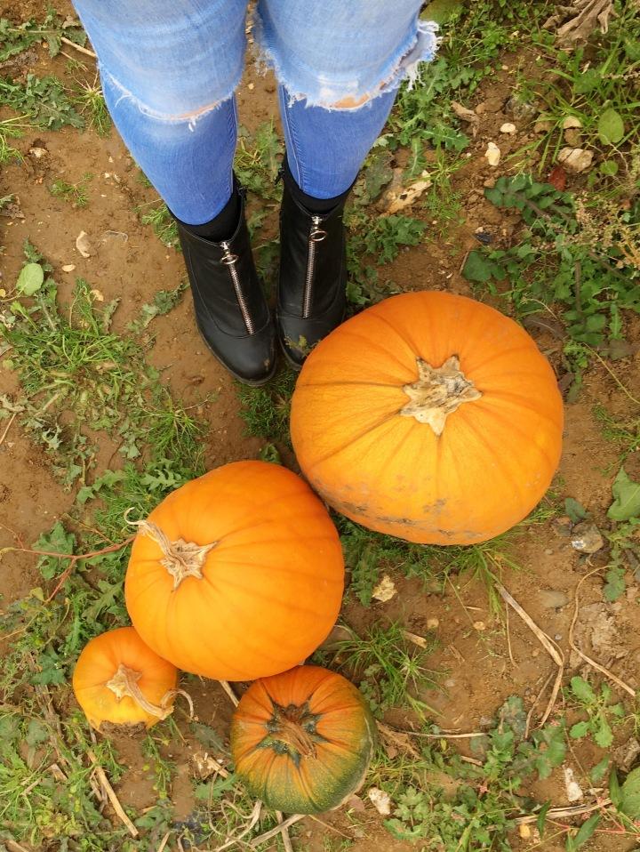 pumpkin-picking-hewitts-farm