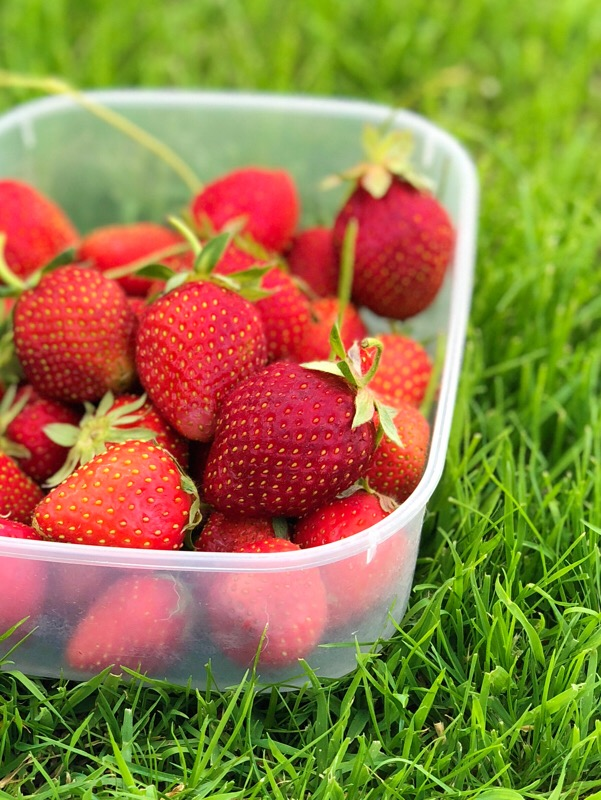 Hewitt's Farm Strawberry Picking