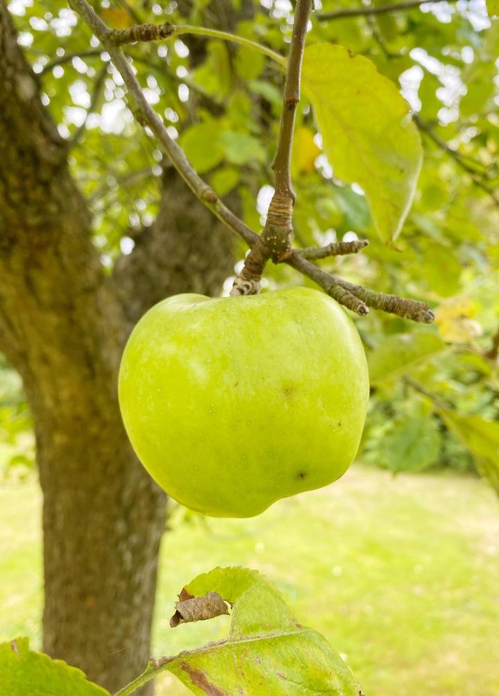 9 Ways To Use Up Your Autumn AppleHarvest