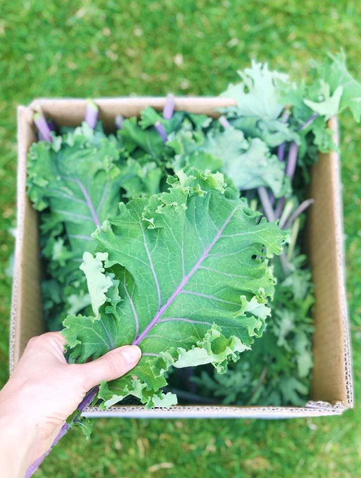 Slow Living Series: Growing My OwnFood